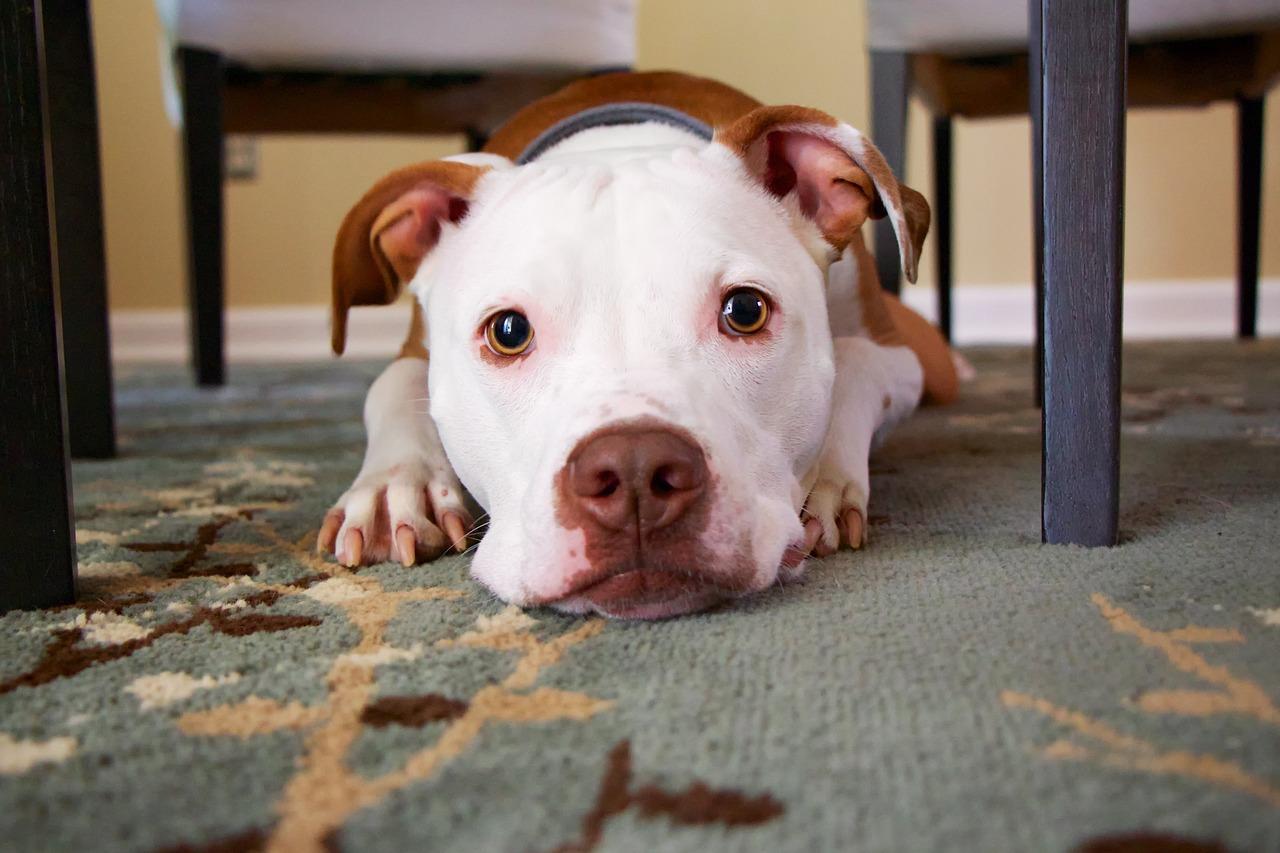 Dlaczego warto podawać psu probiotyk?